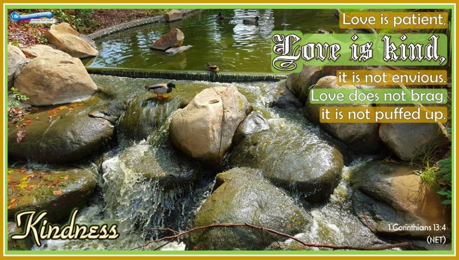 picture for kindness - duck pond Loma Linda VA
