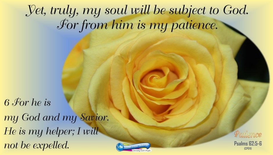 picture of yellow rose for patience bible study link